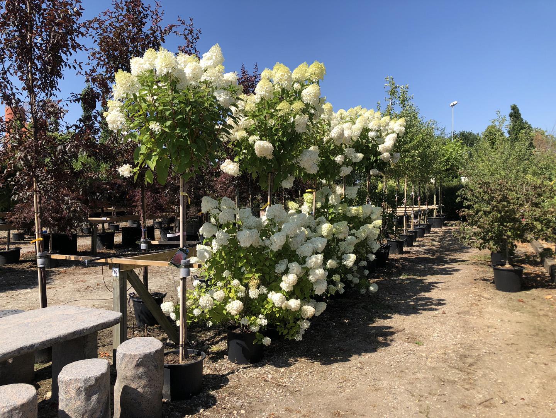 Blomstrede buske – Jysk Plantesalg ApS